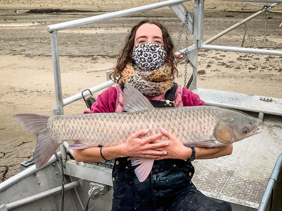 scientist holding adult grass carp