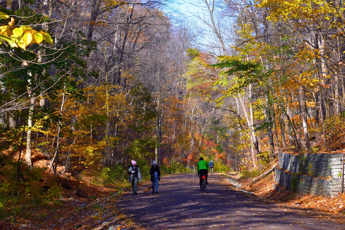 bicyclists in wooded area