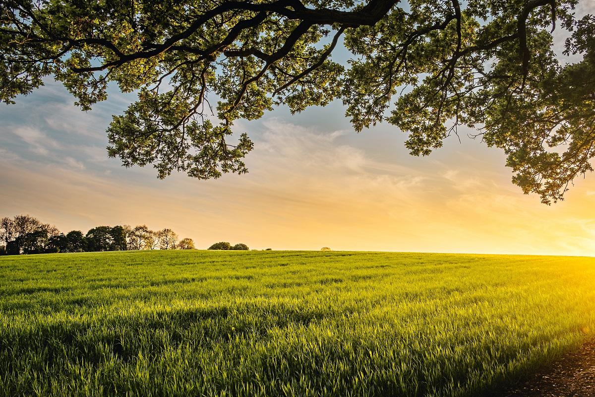 A grass field at dawn