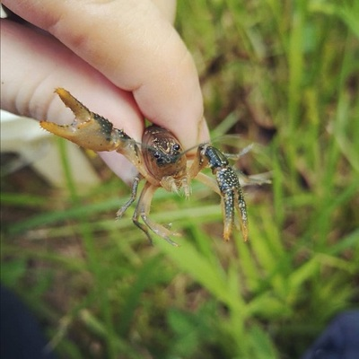 holding a crayfish