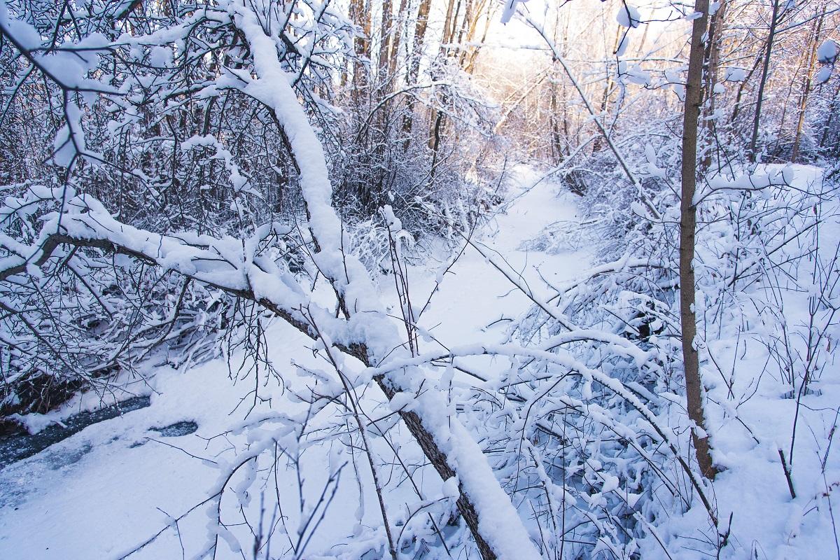 winter scene in the woods