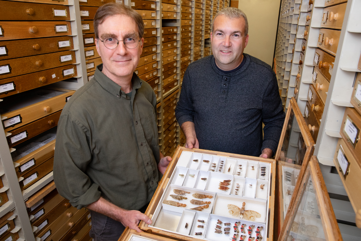 two men hold tray of insect specimens