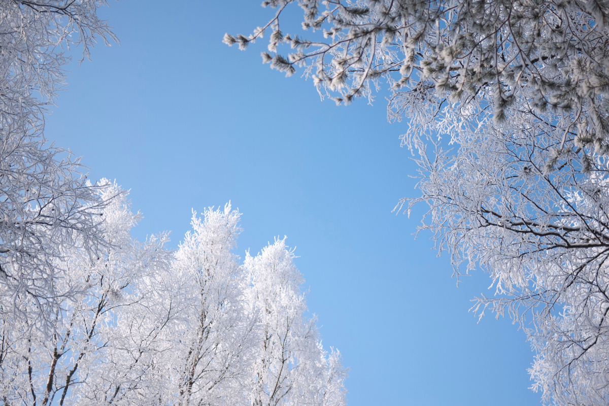 snow and frost on tree branches