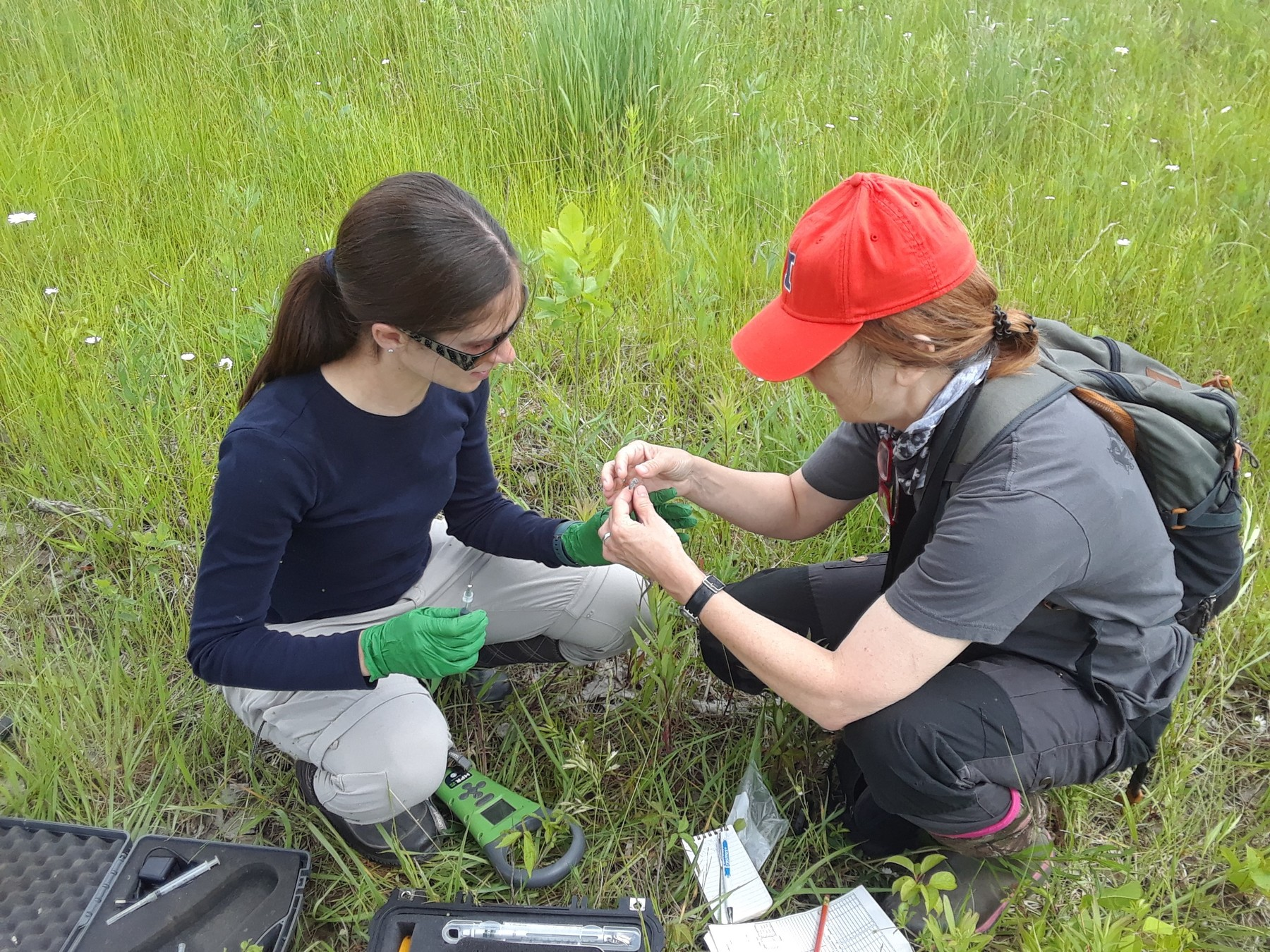 Dr. Jelka Crnobrnja-Isailovic and Jaclyn Adams working with a snake in a field of grass