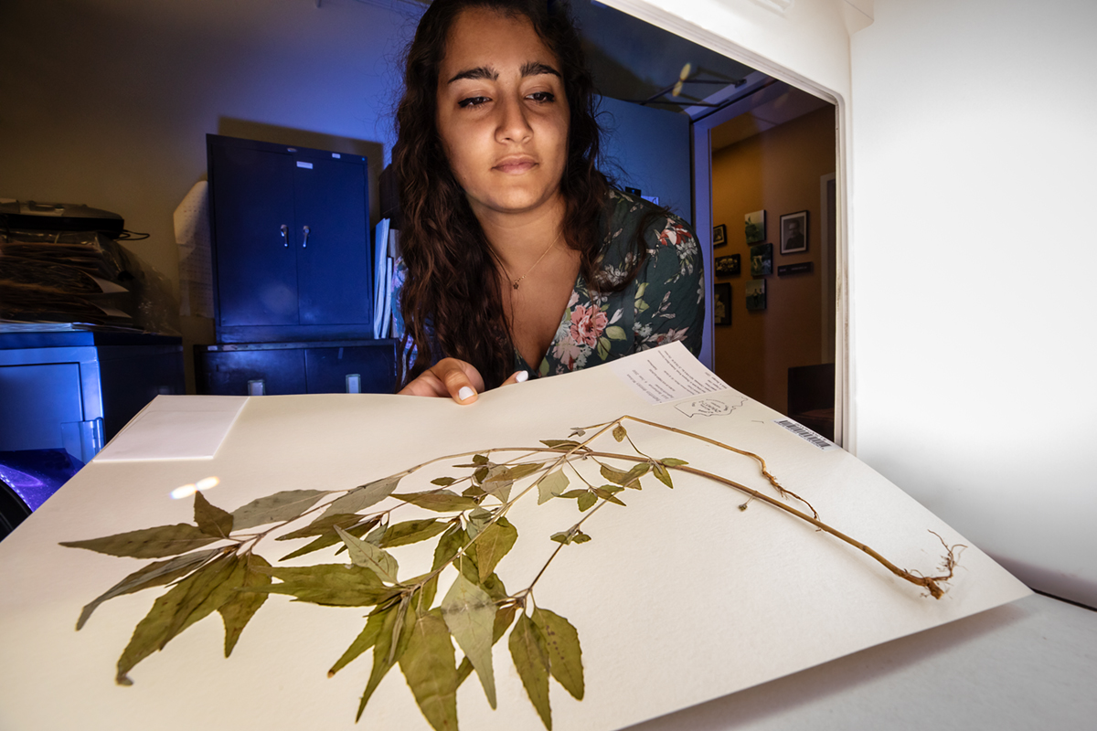 Serina Taluja scans a plant specimen from the INHS herbarium