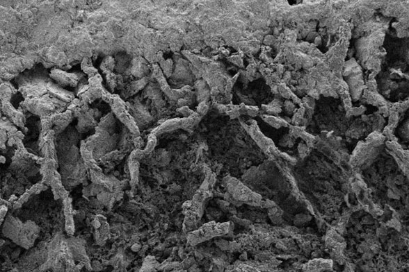 electron microscopy from the fossiliferous dolomitic shale rock