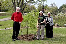 UIS to plant 1,000 donated Japanese maple trees on campus