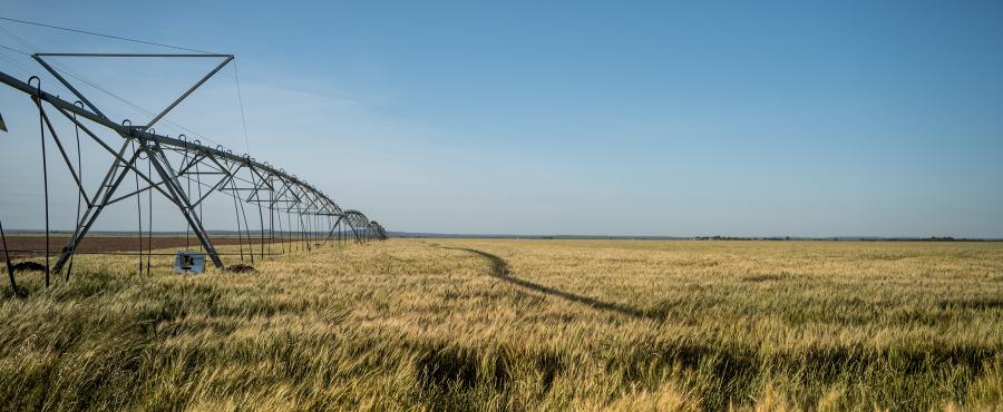 Irrigation equipment over a wheat field