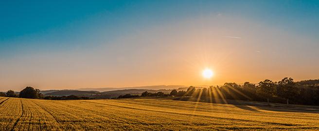 sun setting over field