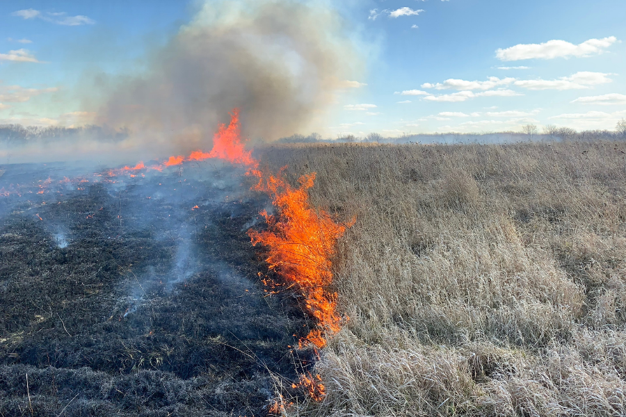 Prescribed burn, March 6, 2020, on lands managed by the Champaign County Forest Preserve