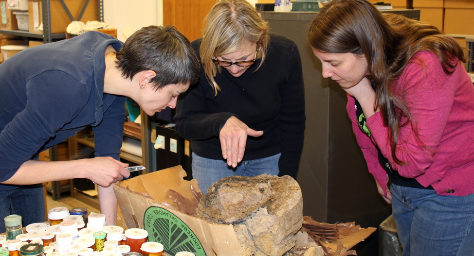 Mary King, Mary Simon, and Kimberly Schaefer examining a possible wooden mortar (large basin for grinding corn).