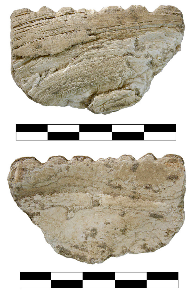 shell tool, front and back