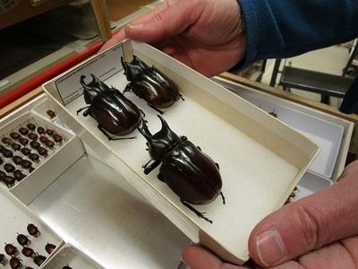 Black Scarabs