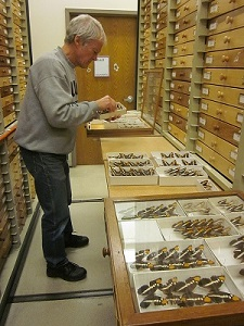 Ed Wilhite in the insect collection