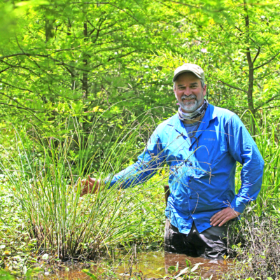 Paul Marcum with Carex decomposita at Round Pond Swamp in Pope County, Illinois.