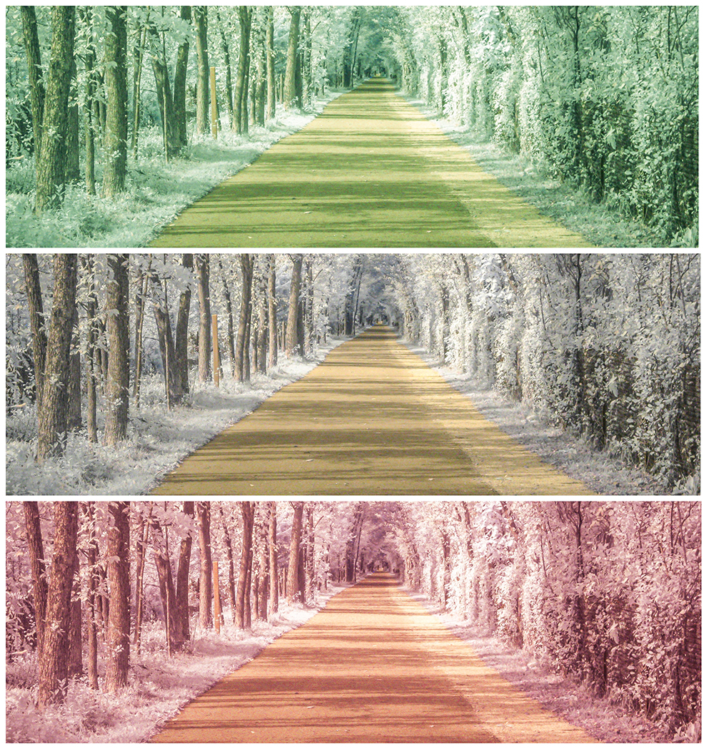 Tree lined pathway repeated three times in green, yellow and red.